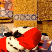 Cow and Covid19, don't Lose Your Sh*t!